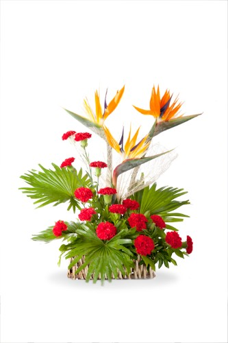 Birds of Paradise and Carnations