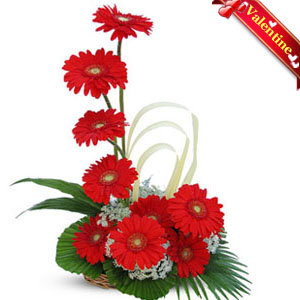 Red Gerberas Basket-VAL