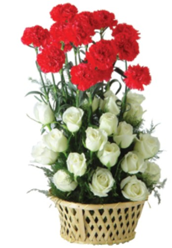 Carnation with Romantic Red