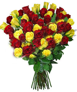 Delighted Roses