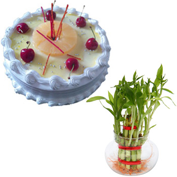 1/2kg Pineapple cake with lucky bamboo
